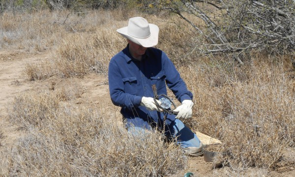coyote trapping school