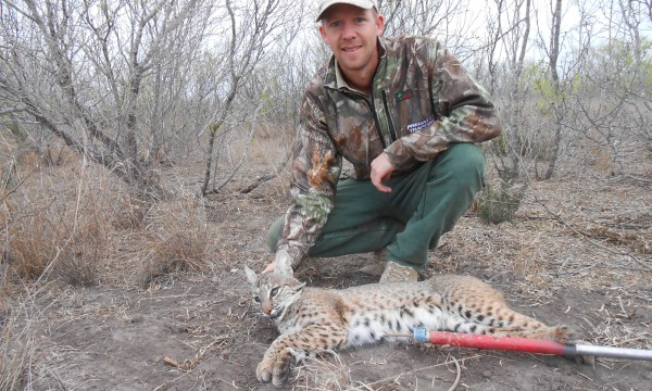 catching bobcat trapper school