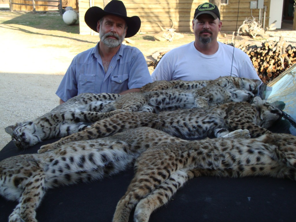predator trapping in Texas
